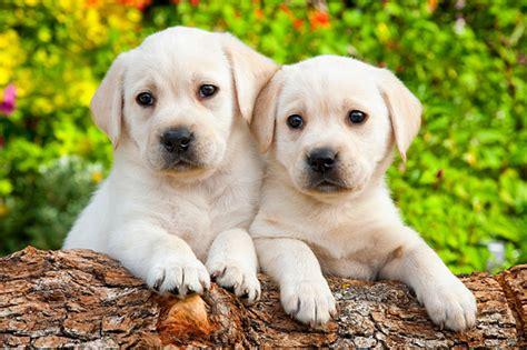 Dog Stock Photos, Images Kimballstock