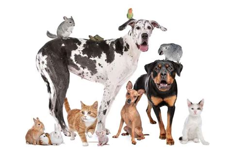 Pet Sitting In Home Mobile Cat and Dog Groomers
