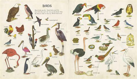Different bird species Outdoor Environmental Education