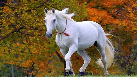 Beautiful Horse Wallpaper Desktop A WallpaperCom