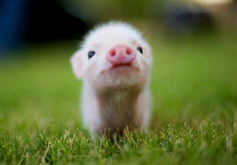 Free Cute Animal Screensavers Best Free Wallpaper