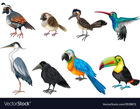 Different types of wild birds Royalty Free Vector Image