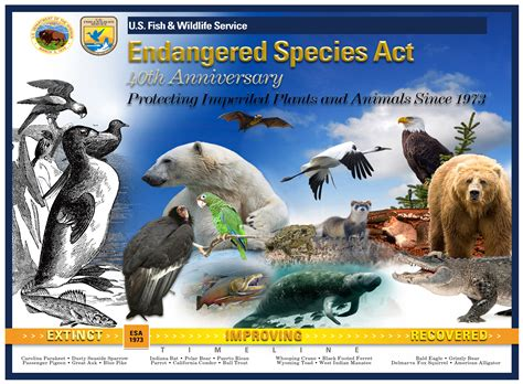 The Legacy and Future of the Endangered Species Act The