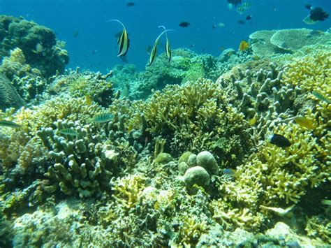 Blok888: Top 10 Most Beautiful Diving Spot in Indonesia