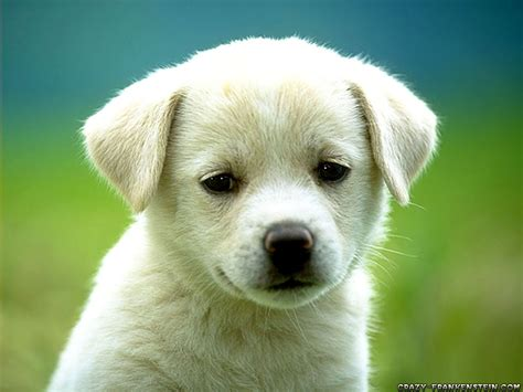 Funny girl dog names ~ Funny images and Jokes