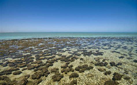 Dive Ningaloo Reef Original Diving