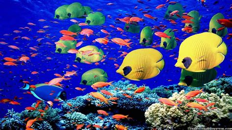 Fish Desktop Backgrounds Wallpaper Cave