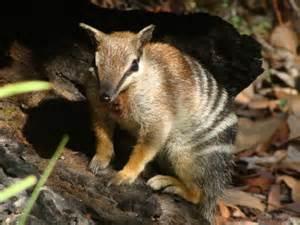 Endangered Animals in Australia List of 6 Critically Endangered