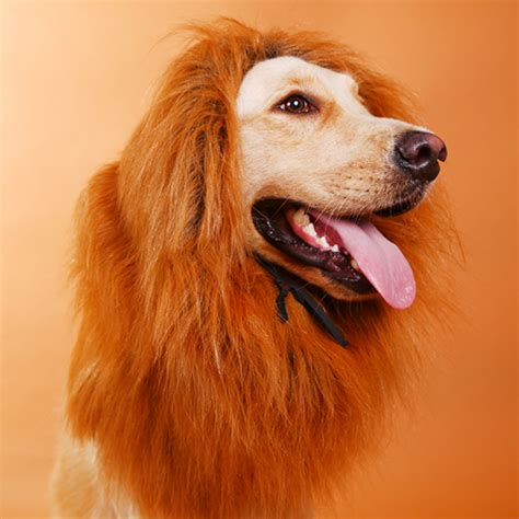 Lion Halloween Costume For Dog Best Lion Dog Beds and Costumes