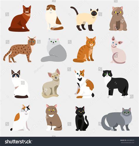 Cat Breeds Cute Pet Animal Set Stock Vector 686388835 Shutterstock