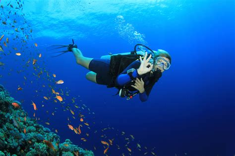 Key Largo Diving, Snorkeling & Watersports at Ocean Divers