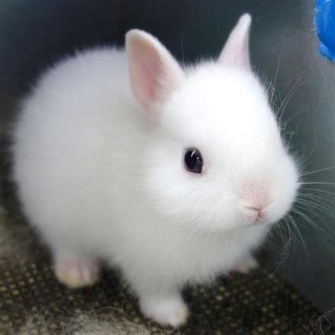 White Bunny Cutest Animals Pinterest Bunny, Animal