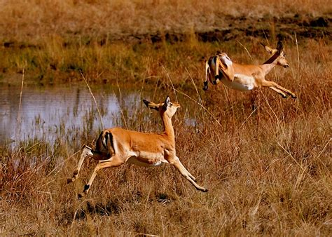 Beautiful African Animals Safaris: Wildlife of Africa