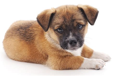 Cute Dog Names For Small Dogs impremedianet