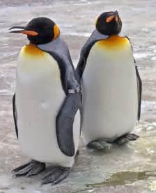 King Penguin Redorbit