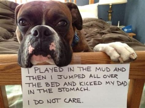32 guilty dogs that would do it again if they could