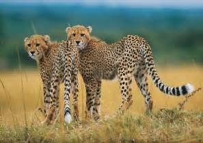 Add on activities Duke Safaris Hunting and Photographic Guides