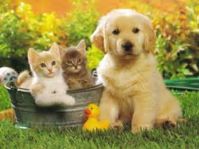 Golden Retriever Pictures and Information Dog Breed Pictures Small