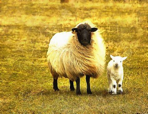 Baby animals photos, photos of small animals, Public domain