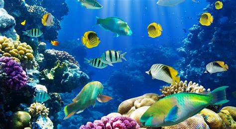Top 【50】 Beautiful FISH Photos Colorful Image HQ