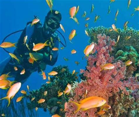 Red Sea Diving and Land Tour Dive Discovery Red Sea