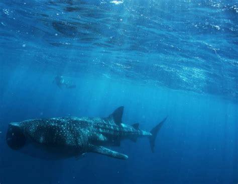 Ningaloo Reef Australia Dive