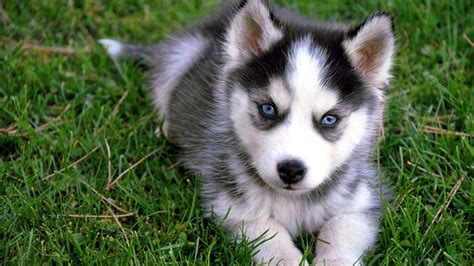 Cute Puppy HD Wallpapers Groovy Wallpapers