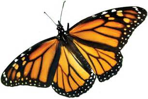 The farm bill and the precipitous decline of monarch