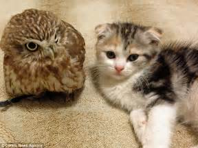 Fuku the owl and Marimo the cat who really DID become best