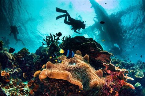 A Scuba Diver's Impact on a Coral Reef DIVEin