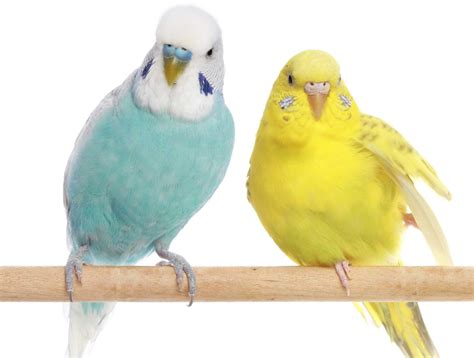 Birds: Have You Considered A Pet With Wings? Houston PetTalk