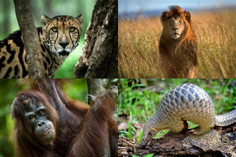 Fighting Extinction: Researching and Designing Solutions