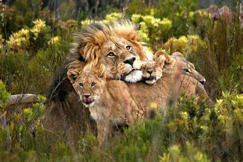 Herbivores wild animal best blog: Big five wild animals