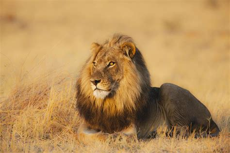 African Animal List, Facts, Conservation Status, Pictures