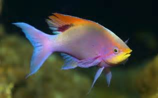 Colorful Fish Wallpaper Fish Wallpaper