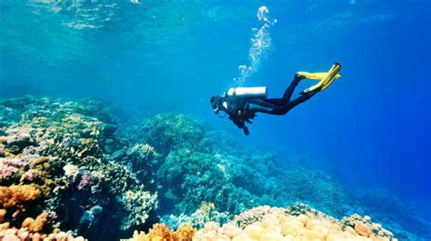 5 best places to go scuba diving in India Indiacom