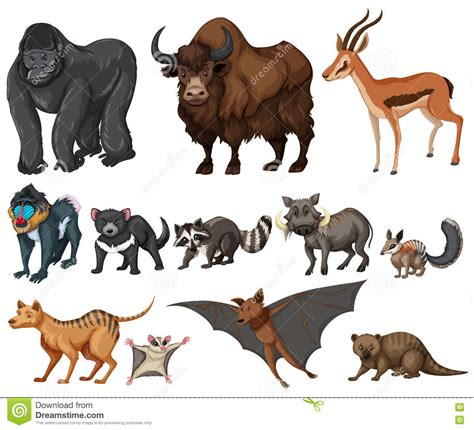 Different Kind Of Wild Animals On White Stock Vector