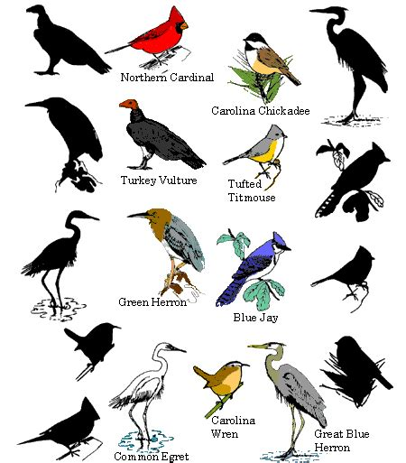 Bird Facts ~ Types Of Birds