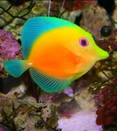 Best 25 Tropical fish ideas on Pinterest Colorful fish