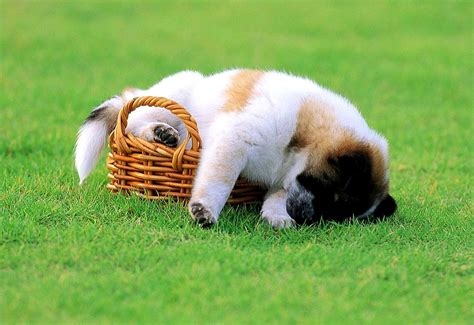 34 Puppies Who Can Sleep Absolutely ANYWHERE