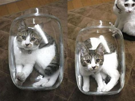 Two Cats One Jar Animals