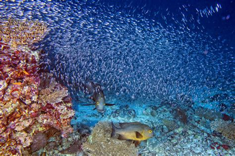 Scuba Diving in Hurghada, Red Sea, Egypt Dive The World