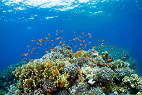 Red Sea : Divetimecom : Scuba Diving Photos