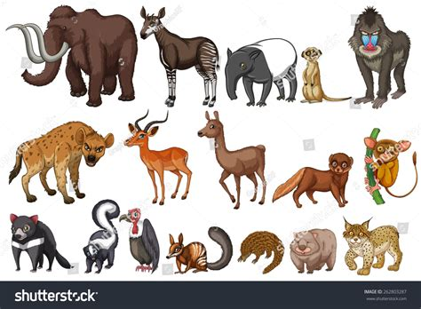 Different Kinds Rare Animals Stock Vector 262803287