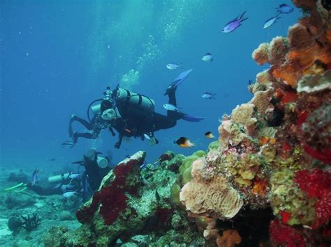 5 Popular Dive Sites of Cozumel