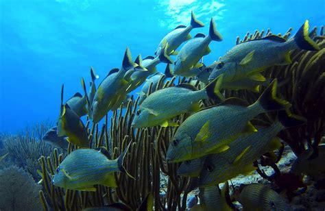Underwater Fish World · Free photo on Pixabay