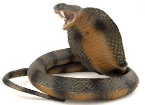 King Cobra Snake Facts and Photos Images The Wildlife