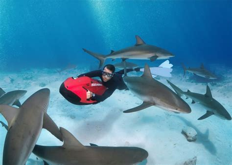 Stuart Coves Dive Bahamas introduce Shark Diving with SEABOB