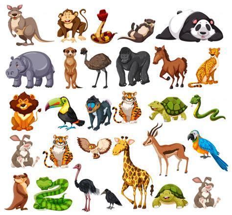 Different types of wild animals on white Vector Premium
