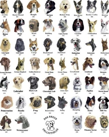Burkle blog: different breeds of dogs